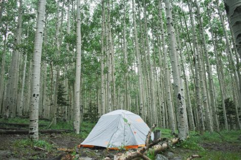 A tent surrounded by Aspen trees on a recent-ish hike