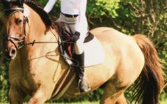 Under the saddle of horseback riding